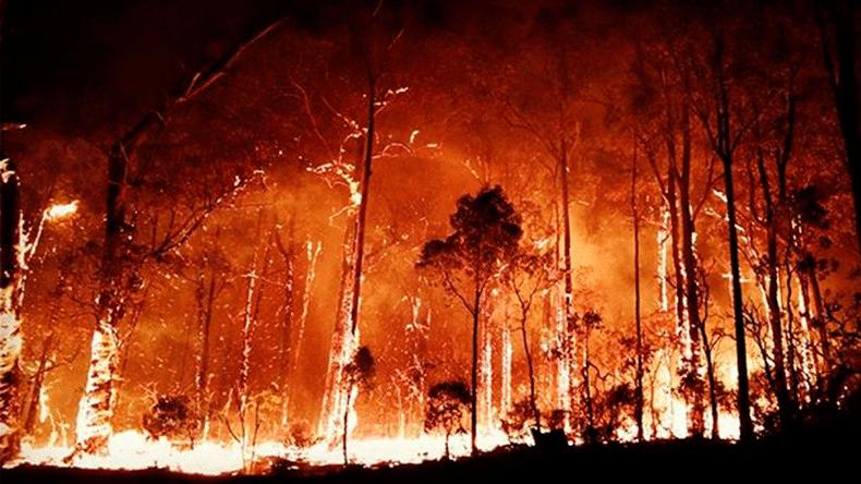 Bush Fire Appeal Milonga by Tristan & Friends @ Buxton Hall | Toorak | Victoria | Australia